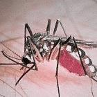Mass treatment could wipe out malaria