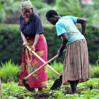 African farmers working in a field