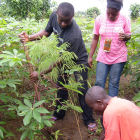 Agroforestry in Cameroon