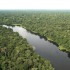 The Amazon