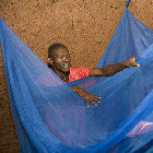 Bednets may not help against a newly discovered mosquito