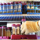 A researcher takes a sample out of a refrigerated cabinet