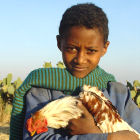 A boy holding a chicken, Africa