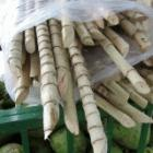 Sugarcane is used to produce ethanol. Increased biofuel production might pose new food security risks.