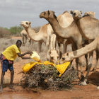 A man providing water for camels