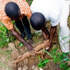 Cassava farmers in Africa