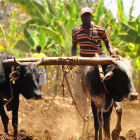 A farmer in East Africa