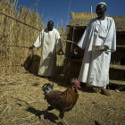 Men tending chickens in Chad, Africa