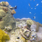 Coral reefs 'adapt to climate change'