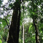 rainforest, canopy from below