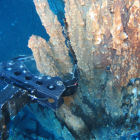 Nautilus plans to mine sediments from underwater hydrothermal vents