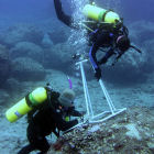 Biologists record algal diversity during an underwater survey