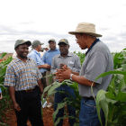 Drought Tolerant Maize for Africa partners in the field