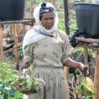 A woman affected by HIV/AIDS grows food for her family in Ethiopia