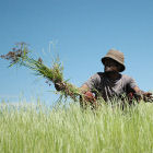 An Ethiopian farmer in a field