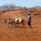 A herdsman in Kenya