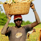 A farmer in Mali, Africa