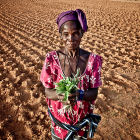 Farmer, North Africa