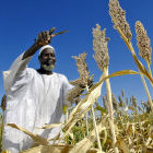 Farmer in Sudan