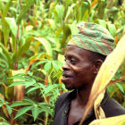 A farmer in a field of maize