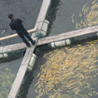 Fish farm