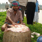 Community-based fisheries, Bangladesh