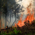 印尼伐林前幾名的省分發生森林大火的危機不降反升。