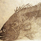 Grouper print