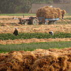 Egyptian farmers harvesting wheat