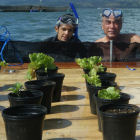 Plant pots on lake platform with scientists