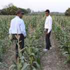 Agriculture research in India