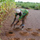 Innovative farming practices in Africa
