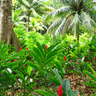 Bosque de Jamaica