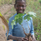 Boy holding a jatropha plant