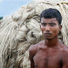 Jute grower in Bangladesh