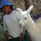 A girl with a lama