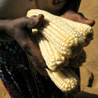 Maize farmer, Africa - Flickr/M. DeFreese/CIMMYT