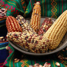 Maize