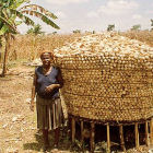A maize farmer in Benin
