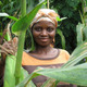 A maize farmer