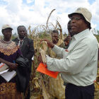 Workshop on insect-resistant maize, Kenya