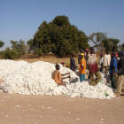 Cotton farmers in Mali