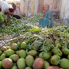 A woman in India sits among piles of mangoes