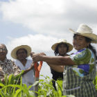 Tending crops in Mexico