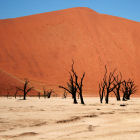 Namib Desert, Namibia
