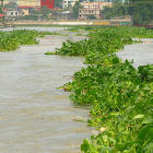 River polluted with phosphorous, the Philippines