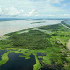Rainforest, Amazonas,  Brazil