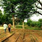 Tree nursery, Niger
