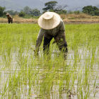 Rice farmer