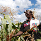 A seed producer in Kenya